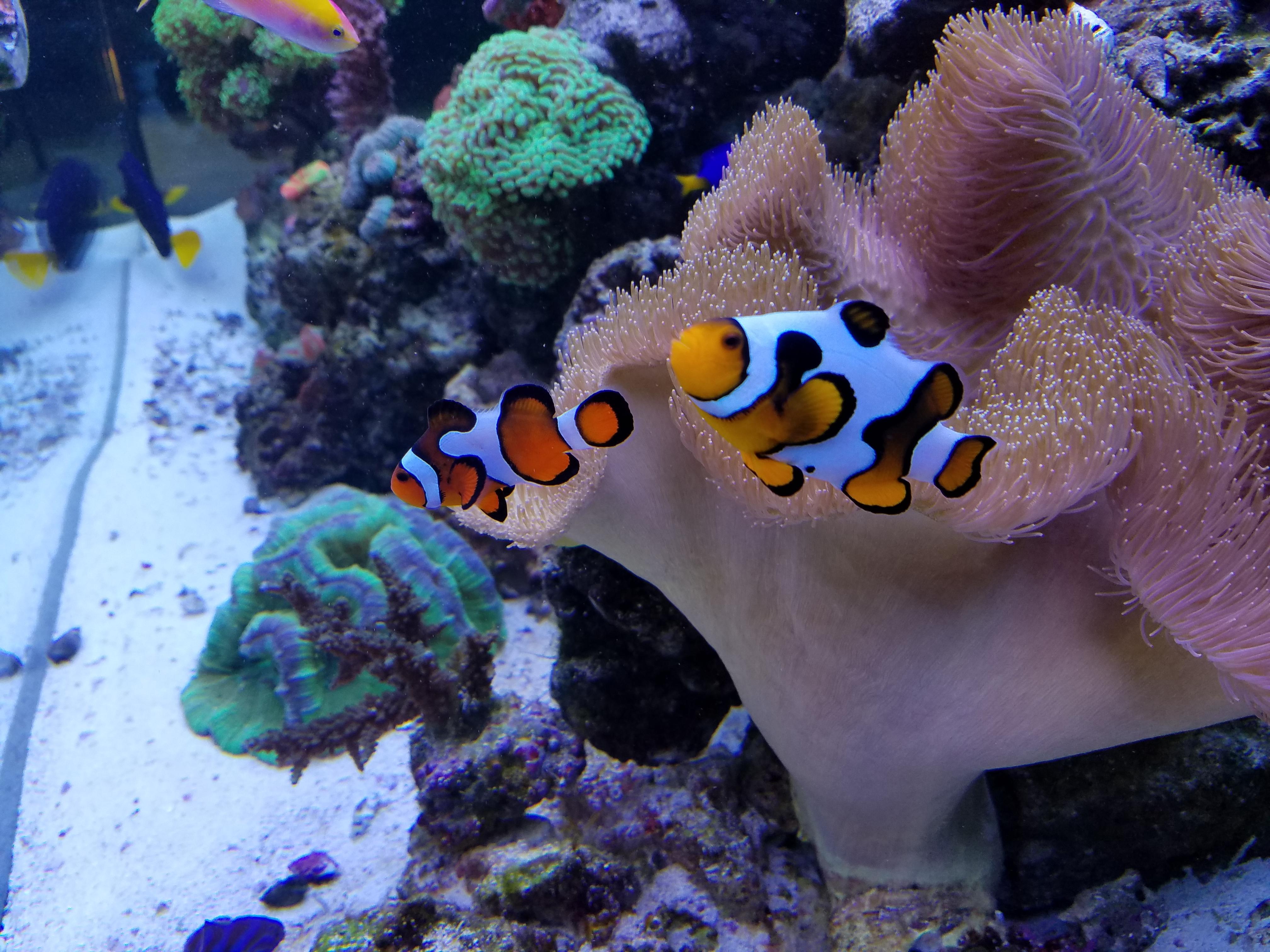 Premier Aquarium Service