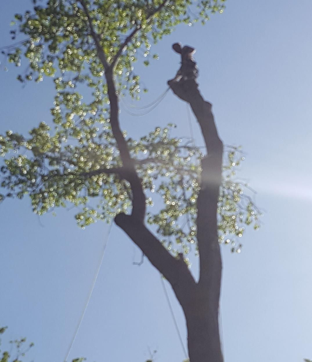 Coffman's Tree Service image 28