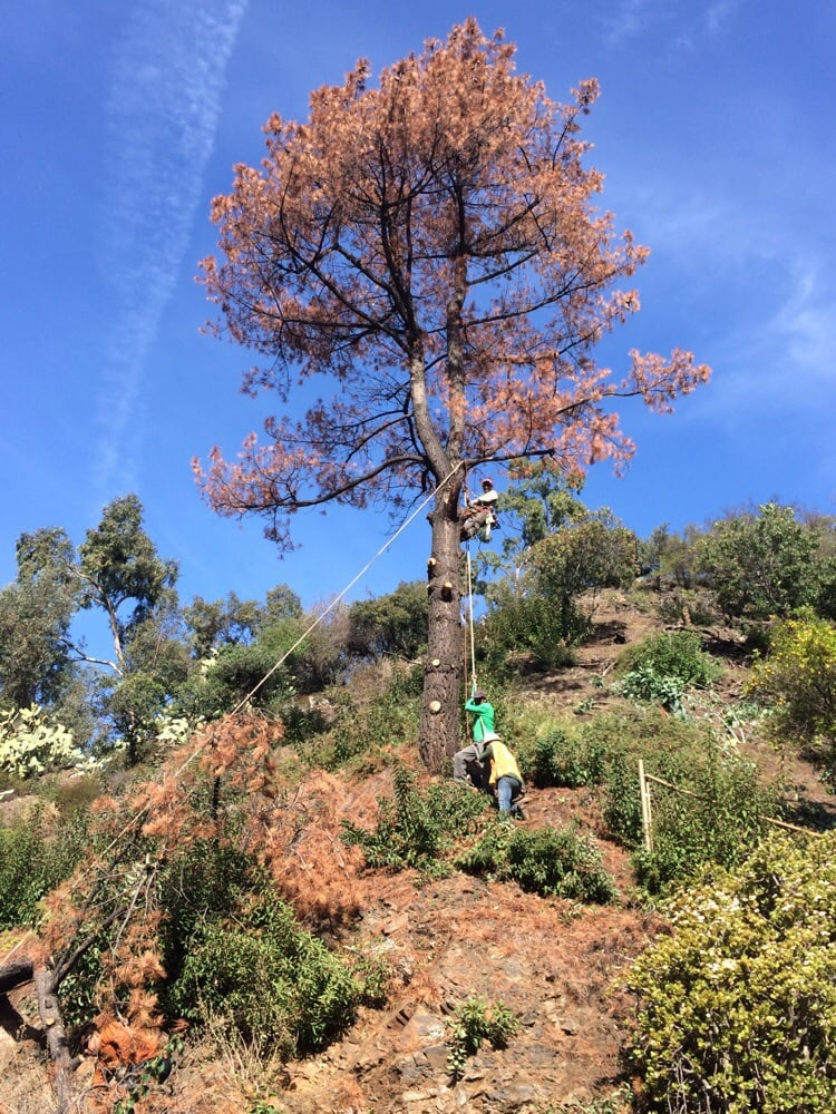 Golden State Tree Service image 7