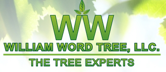 William Word's Tree Experts
