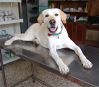 Veterinary Associates image 0