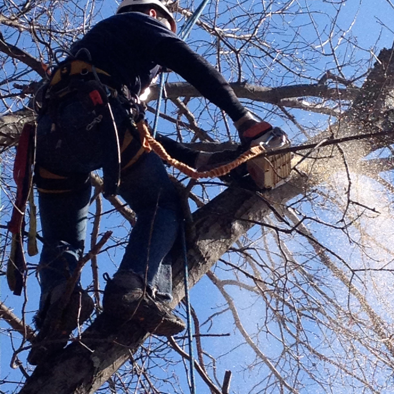 Schwan's Tree Care image 1