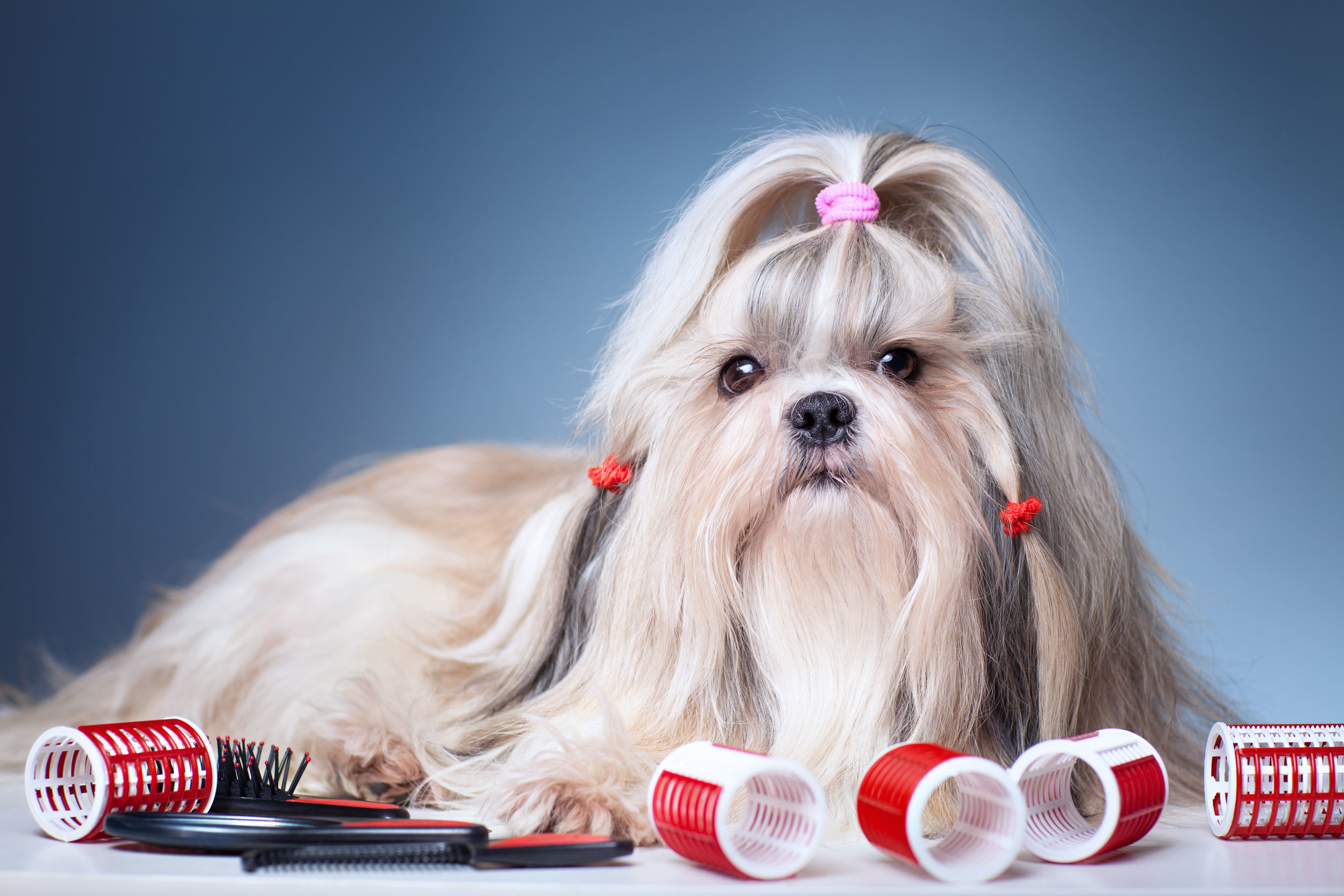 Pup Culture image 0