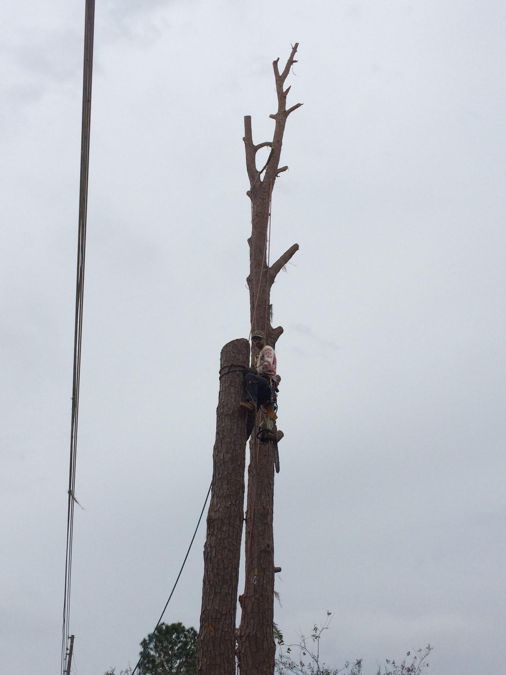 Karney Tree Service image 16