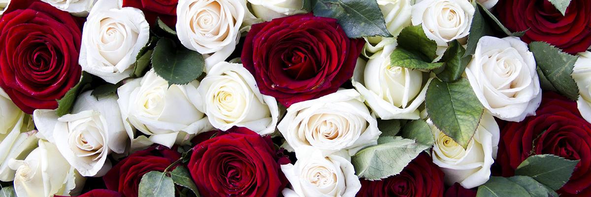 La Casita De Las Flores image 0