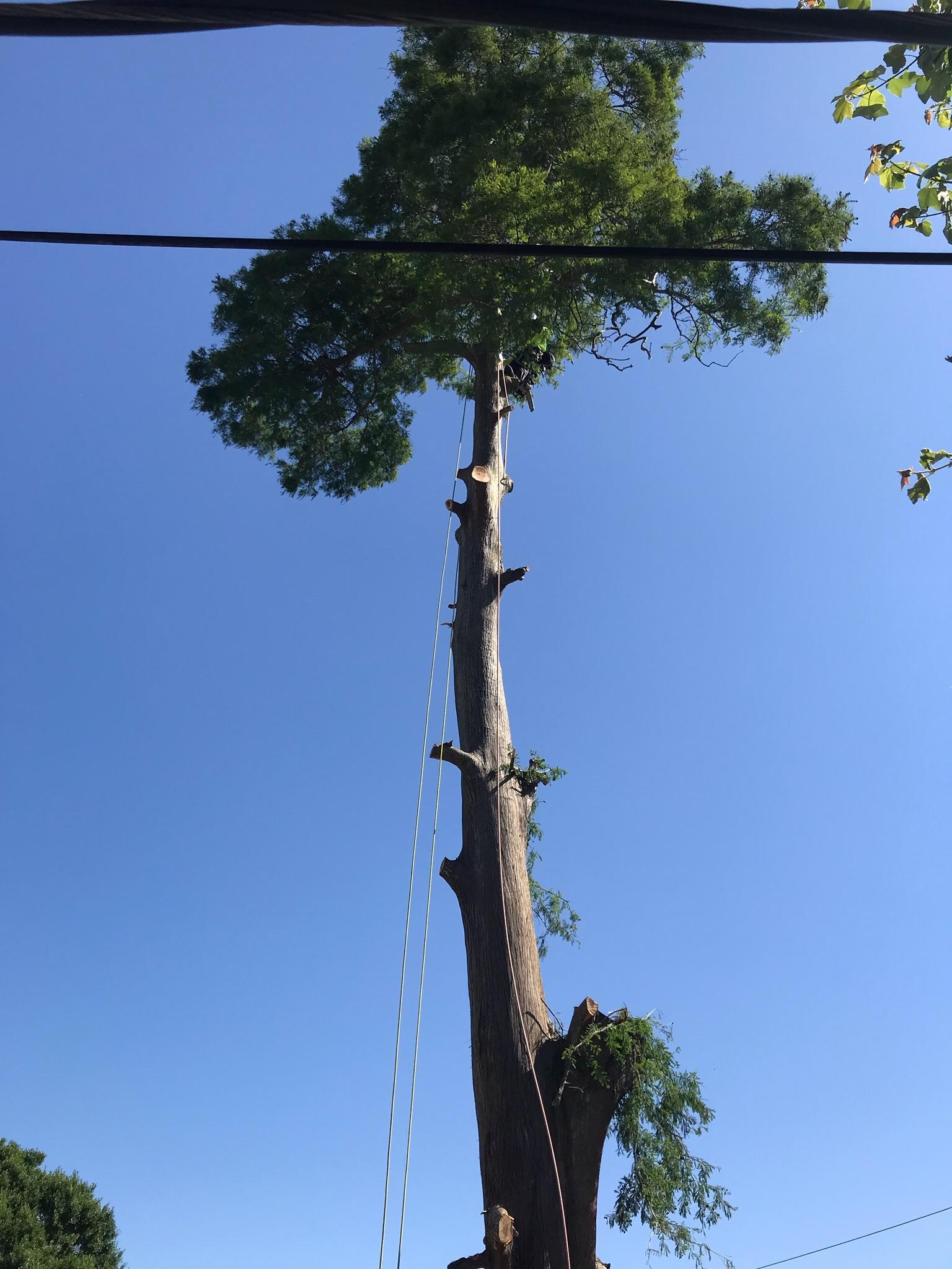 S & L Tree Service & Stump Grinding image 6