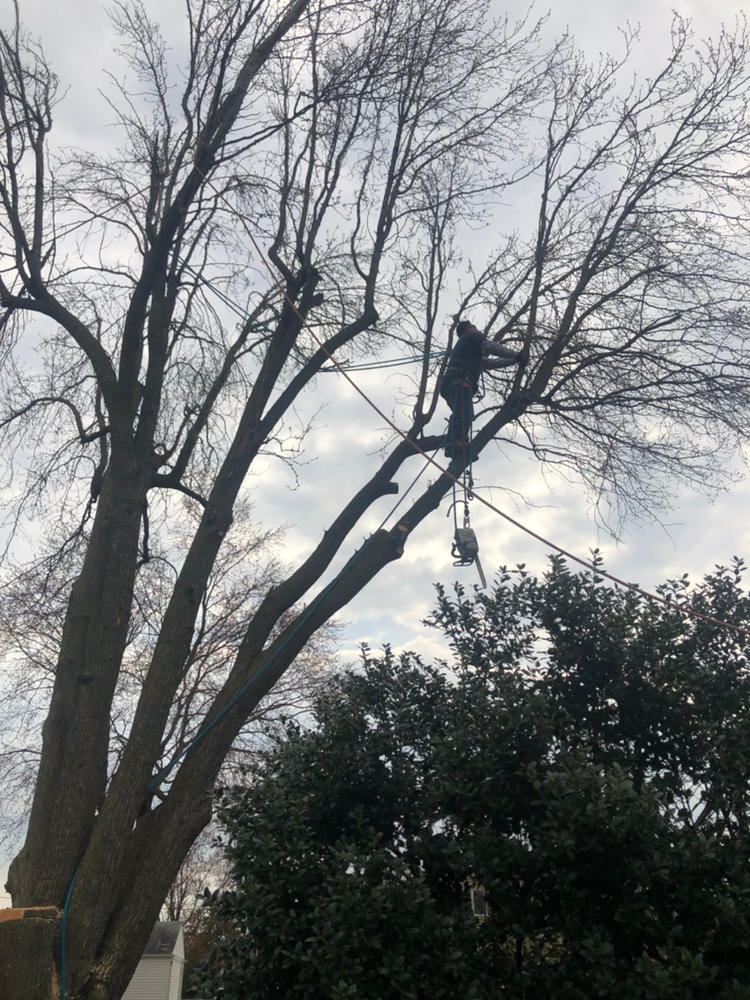 Prate's Tree Services image 4