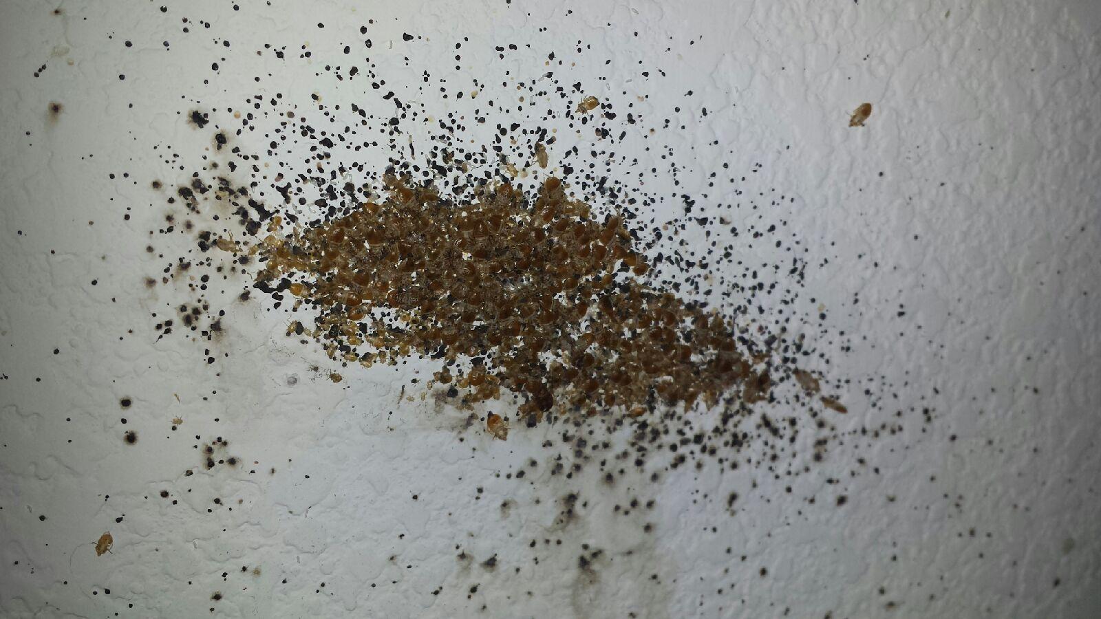 Arizona Heat Pest Services image 13