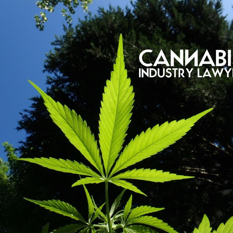 cannabis industry lawyer image 3