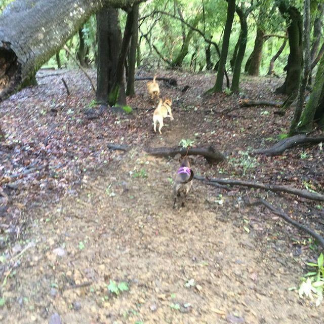 Fetch! Pet Care image 25