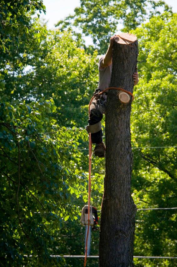 Gregerson Tree Service LLC image 1