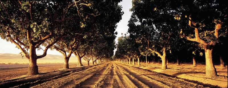 Avila Acres Country Gourmet image 1