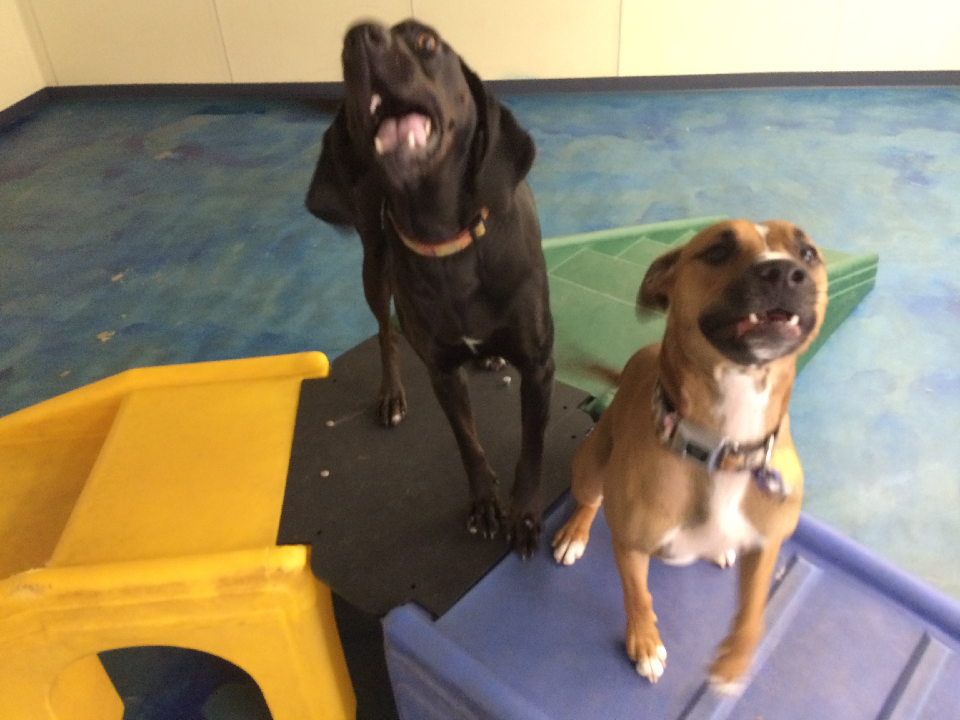 Jagger's Doggie Daycare, Dog Grooming, Training & Boarding image 19