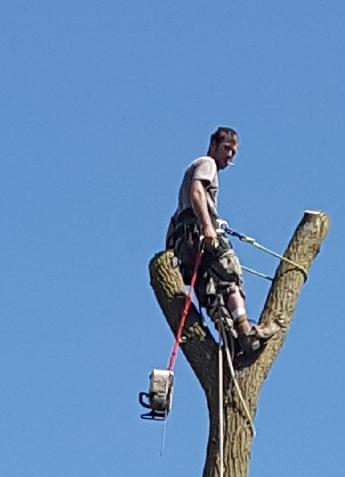Coffman's Tree Service image 21
