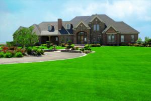 Turfco Lawn Care image 5