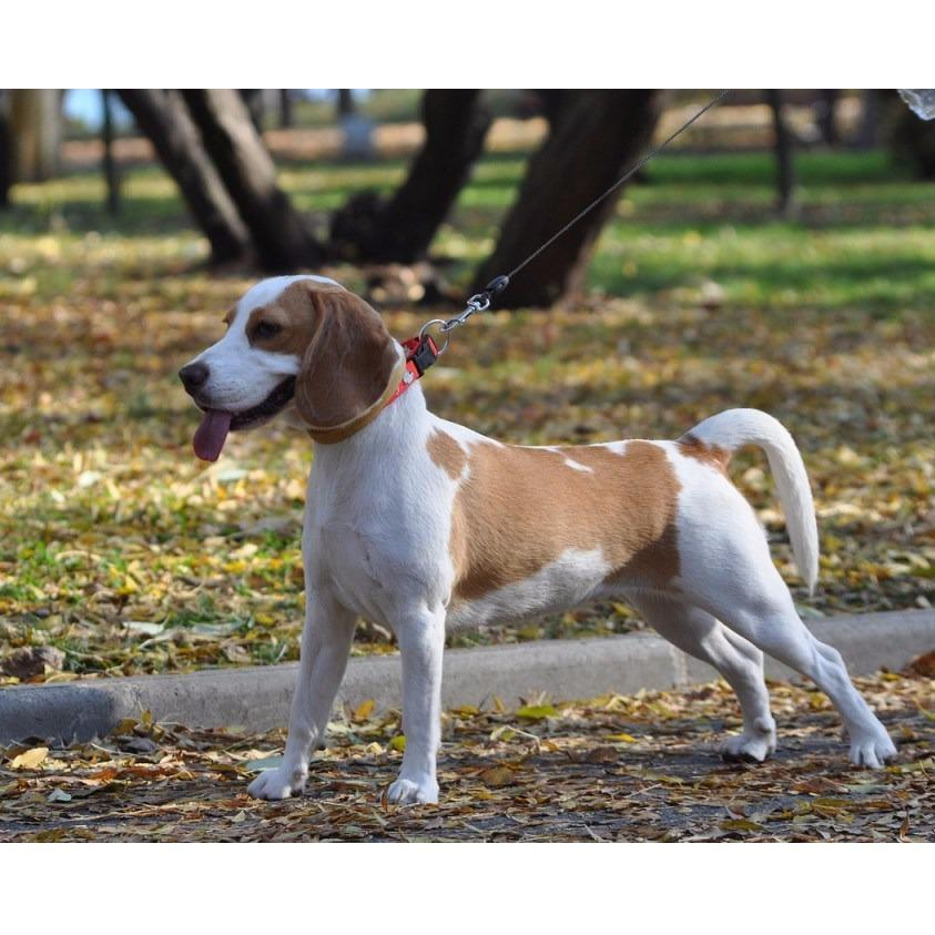 MARLEY & ME LLC DOG WALKER EXTRAORDINAIRE