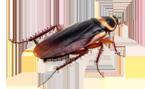 Crown Exterminators image 2