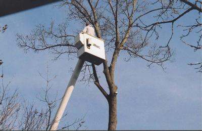 Huston's Tree Service image 11