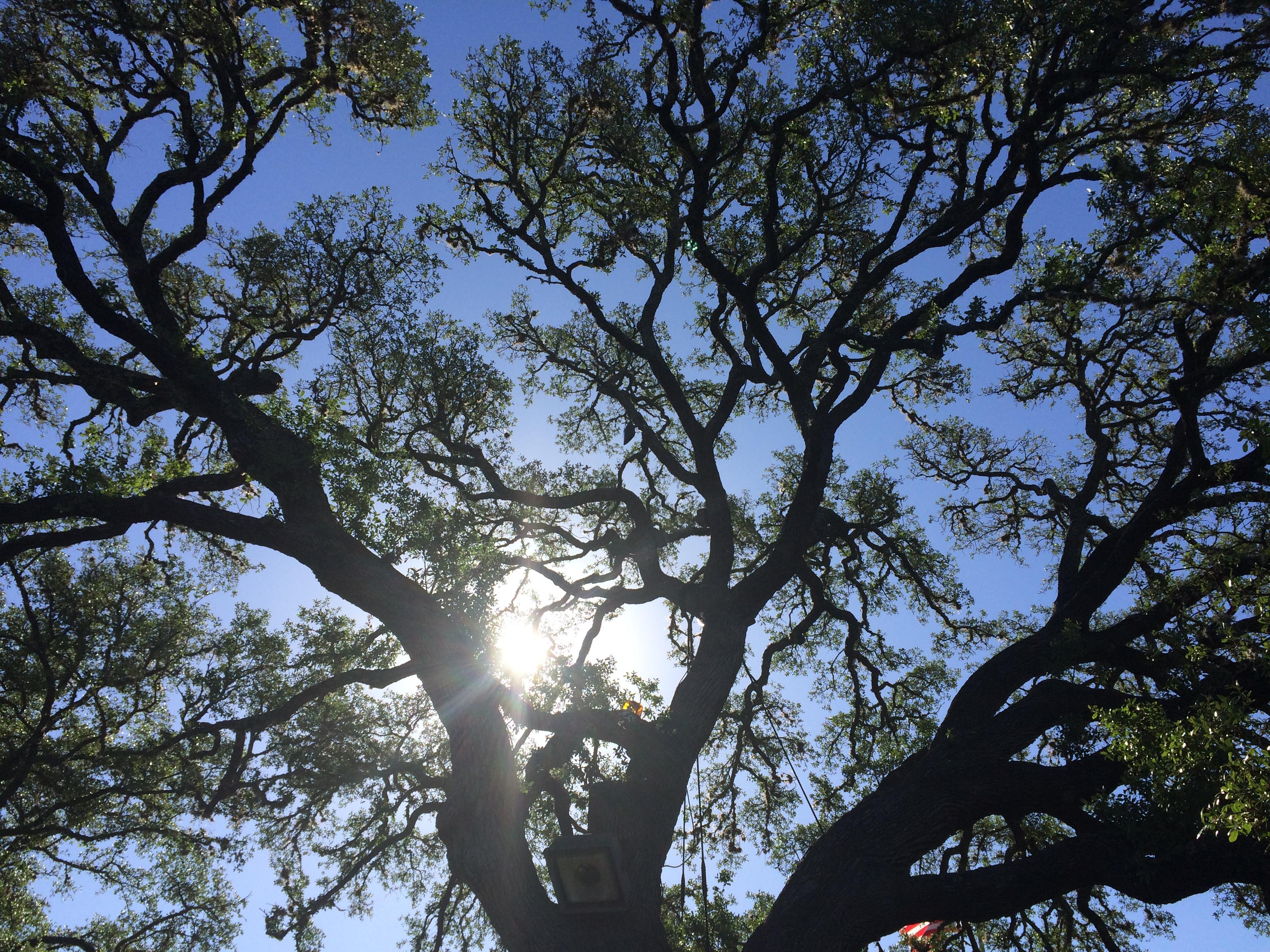 New Leaf Tree & Shrub Care image 3