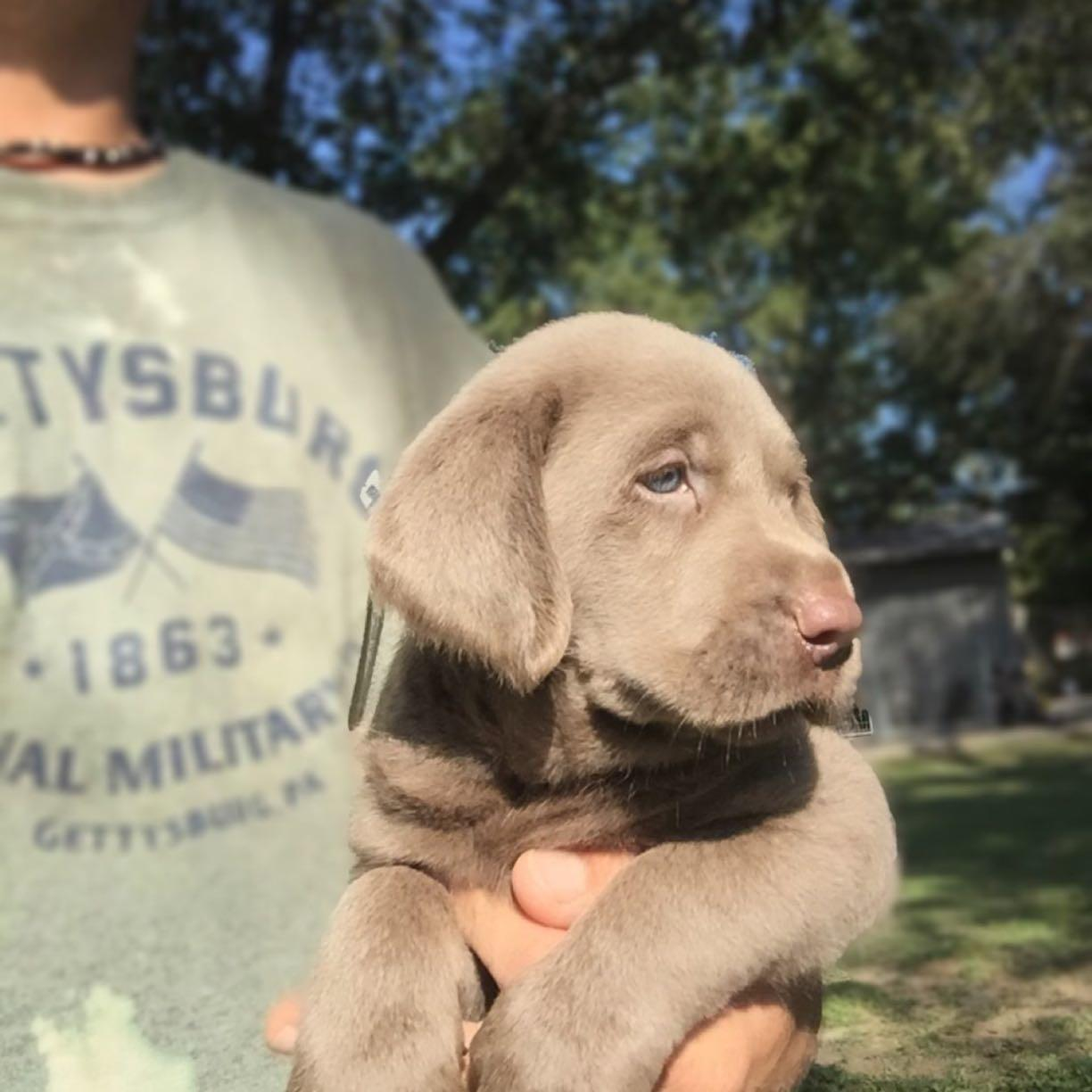 Indianola, MS silver and charcoal kennels | Find silver and