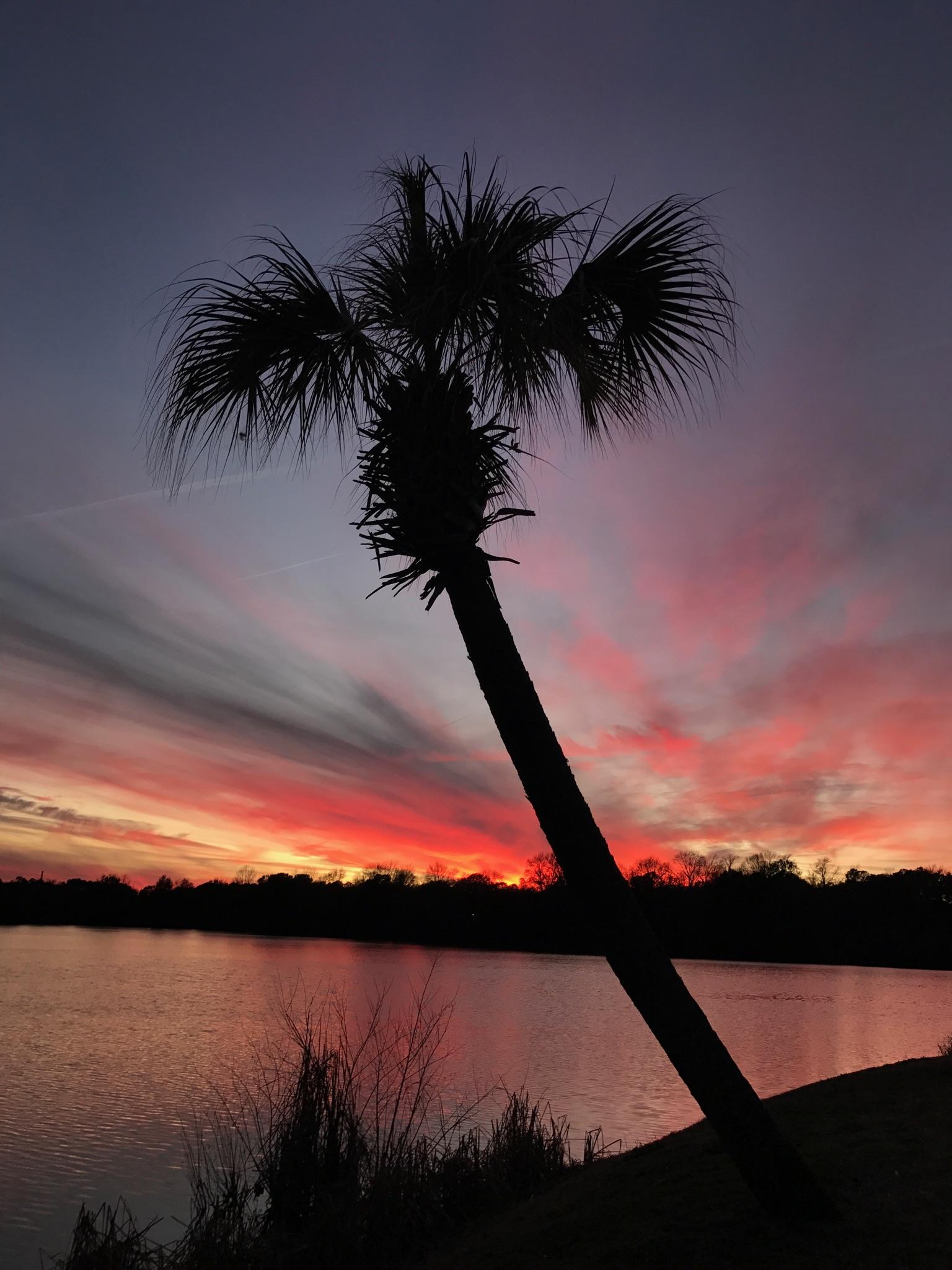 Mount Pleasant / Charleston KOA Holiday image 39