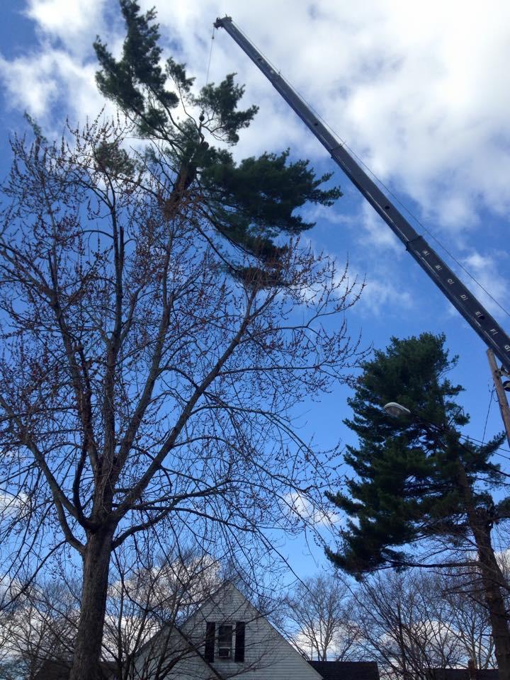Charlie Nansteel Tree & Excavation, LLC image 2
