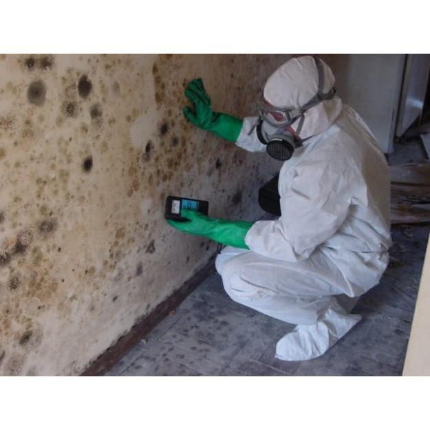 All Clean Mold Remediation