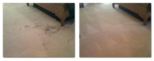 Go Green Dry Carpet Cleaning image 0