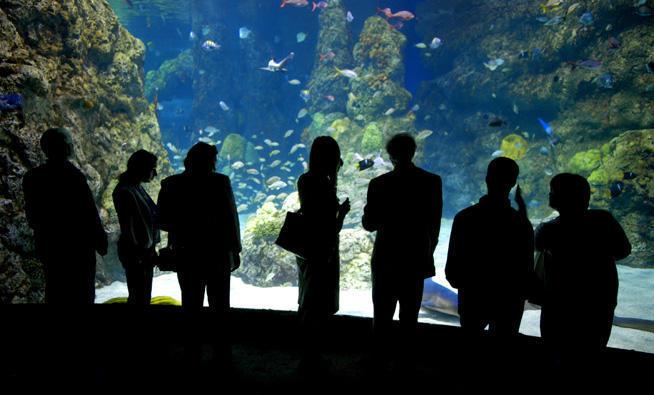 Aquarium Restaurant