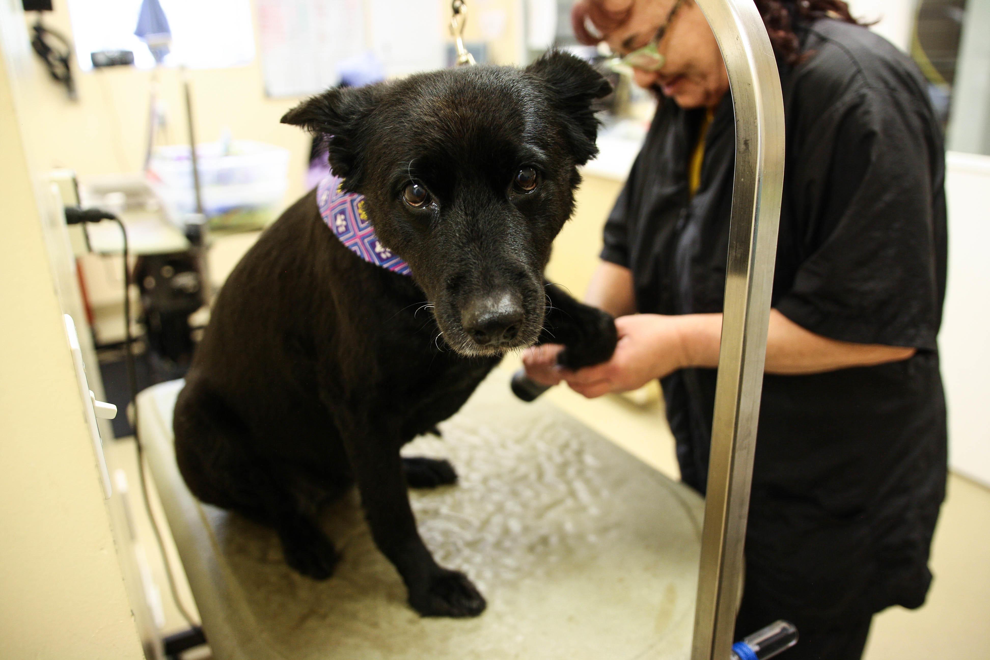 Calusa Veterinary Center in Boca Raton, FL, photo #16