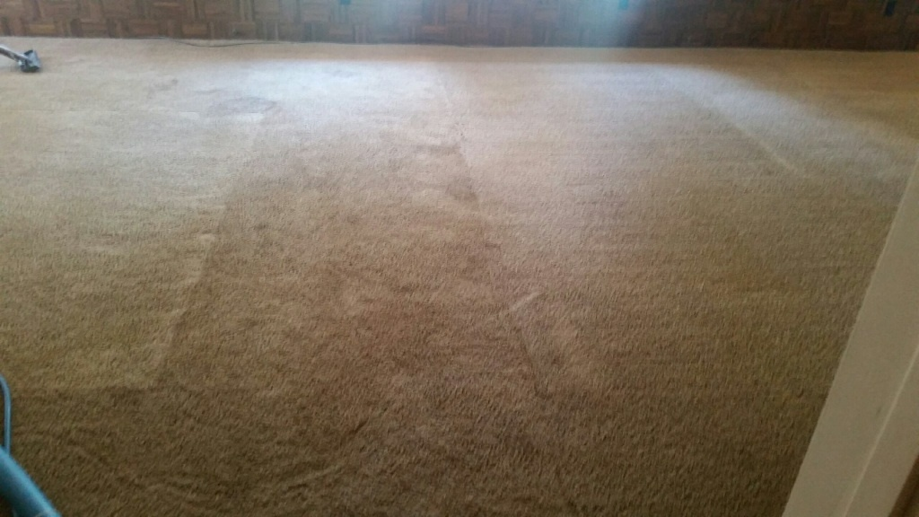 CleanDay Carpet Care image 2