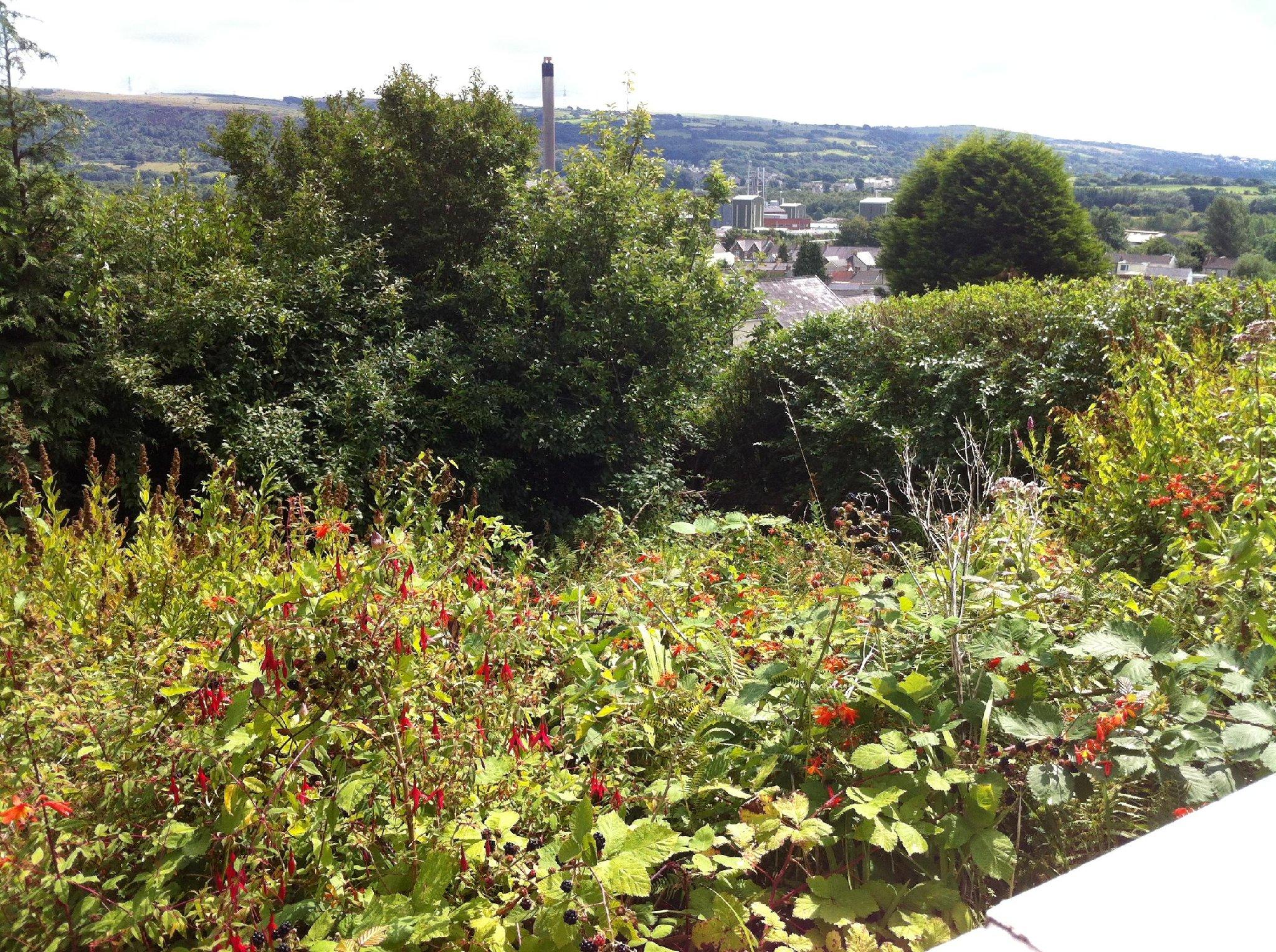 Landscape Garden Design Swansea : Tws landscaping garden design planting landscape