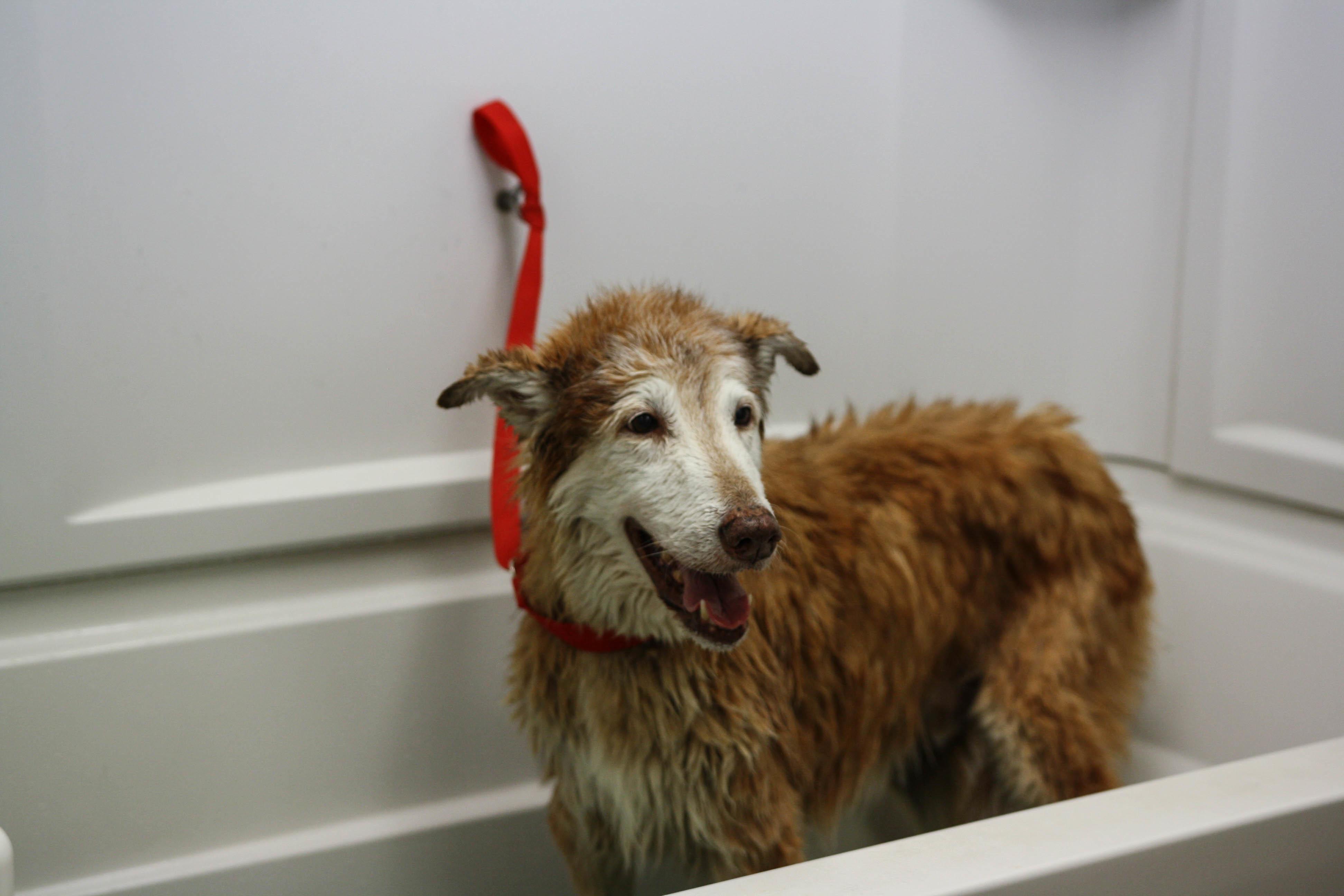 Oakhurst Veterinary Hospital image 12