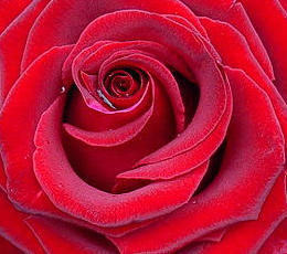 Ashley's Flowers image 0