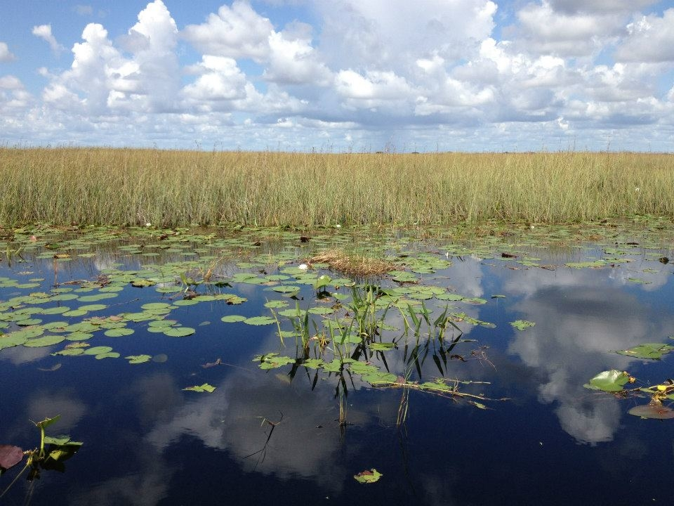 Buffalo Tigers Fl Everglades Airboat Tours image 1