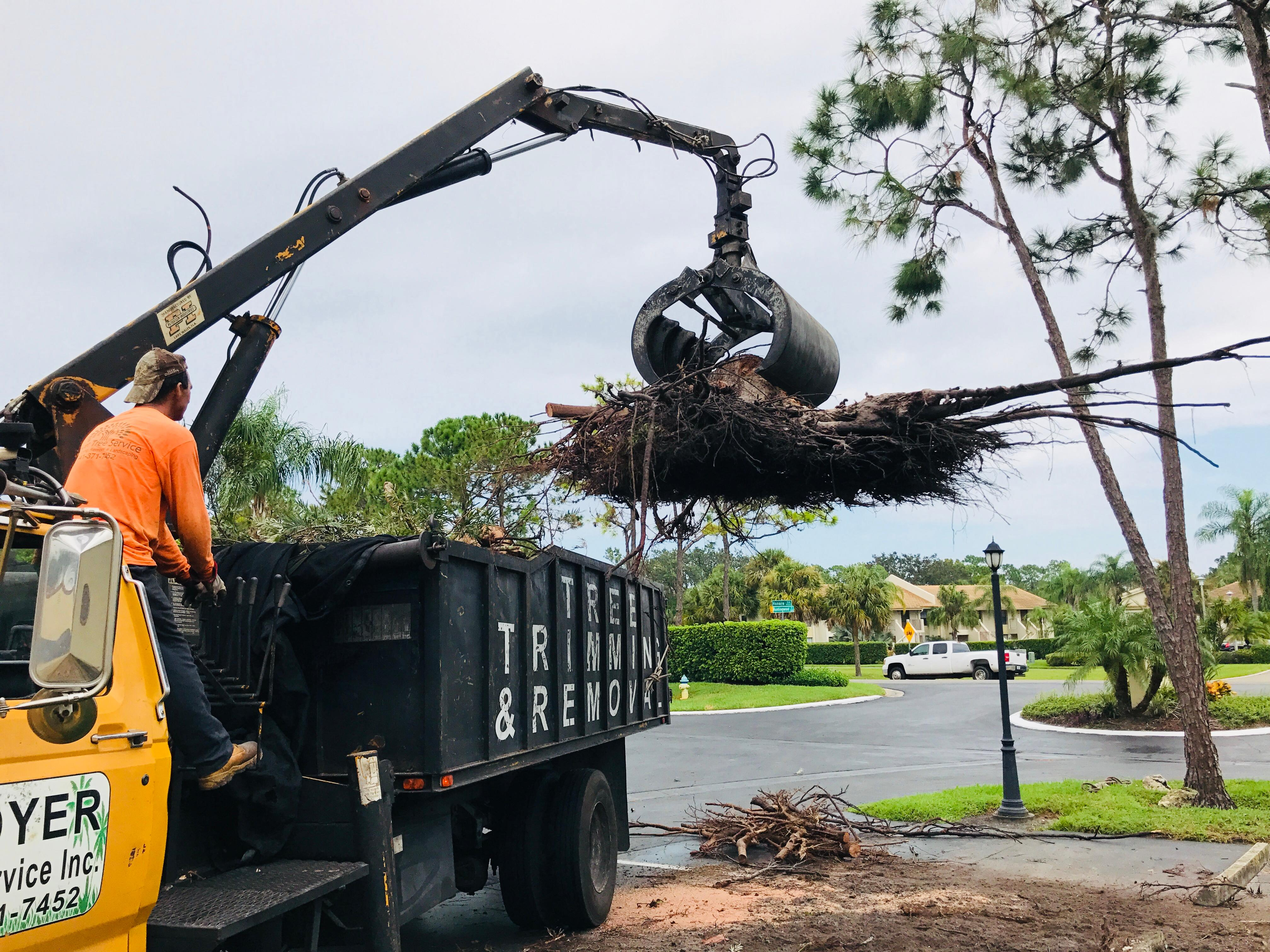 Troyer Tree Service image 2