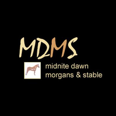 Midnite Dawn Morgans & Stables image 0