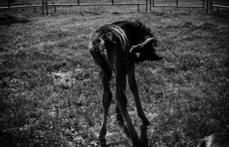 Virginia Equine Pllc image 7