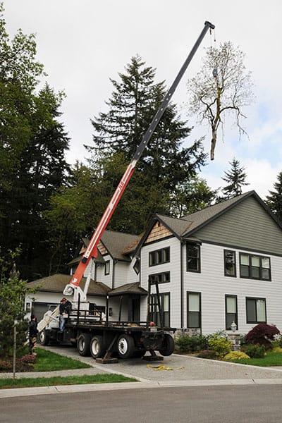 Archon Tree Services, Inc. image 6