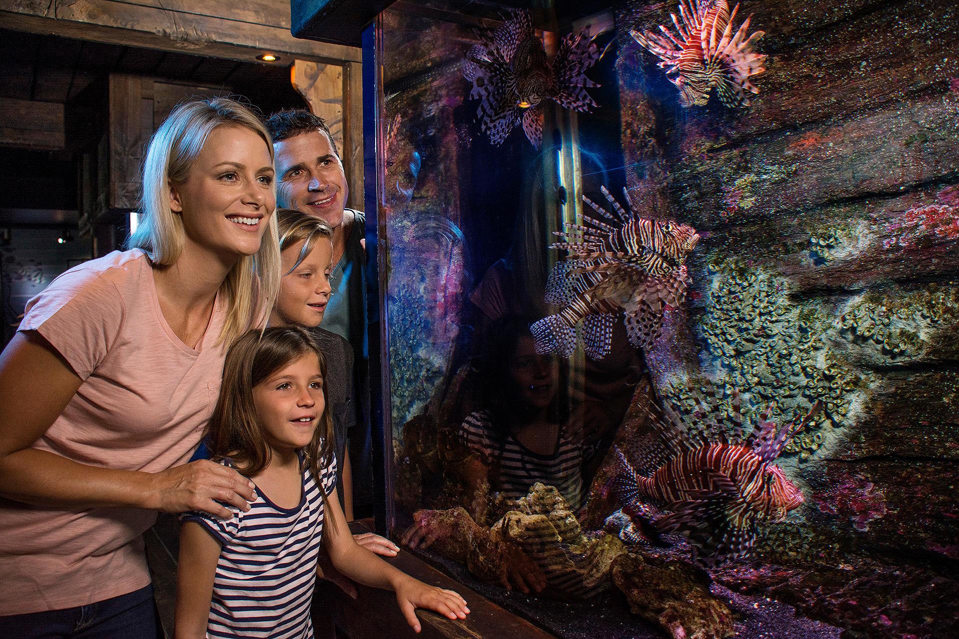 SEA LIFE Sunshine Coast Aquarium