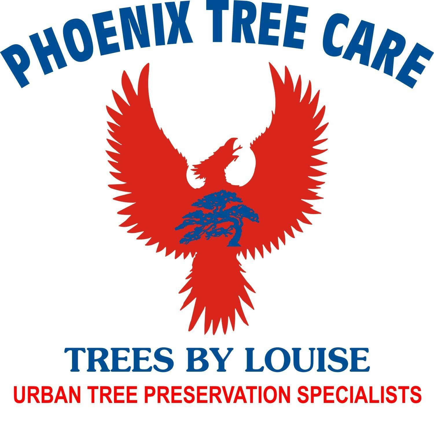 Phoenix Tree Care / Trees By Louise image 0