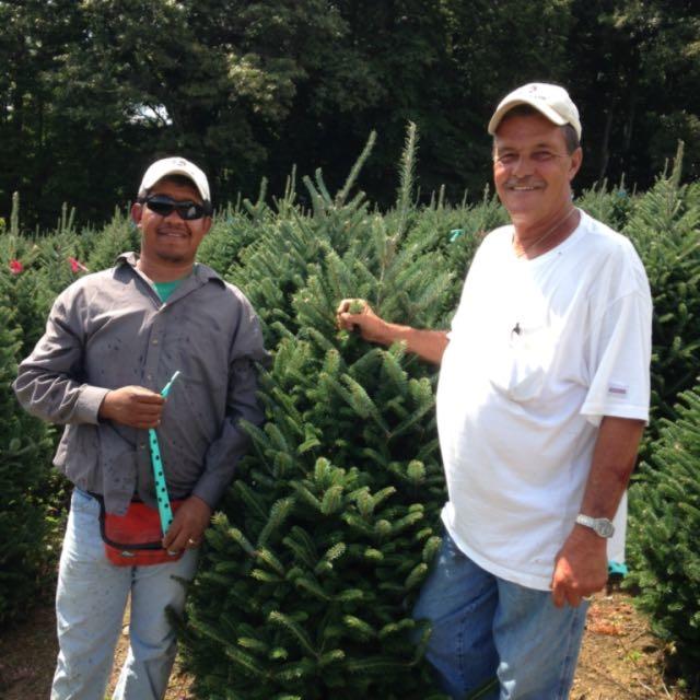 Dave's Christmas Tree Lot image 0