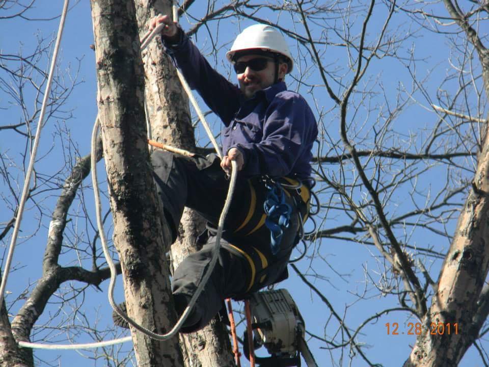 ArborJacks Tree Service image 1