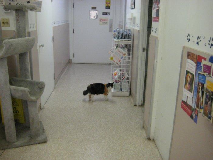 VCA Parkwood Animal Hospital image 3