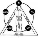 Advanced Chiropractic Applied Kinesiology