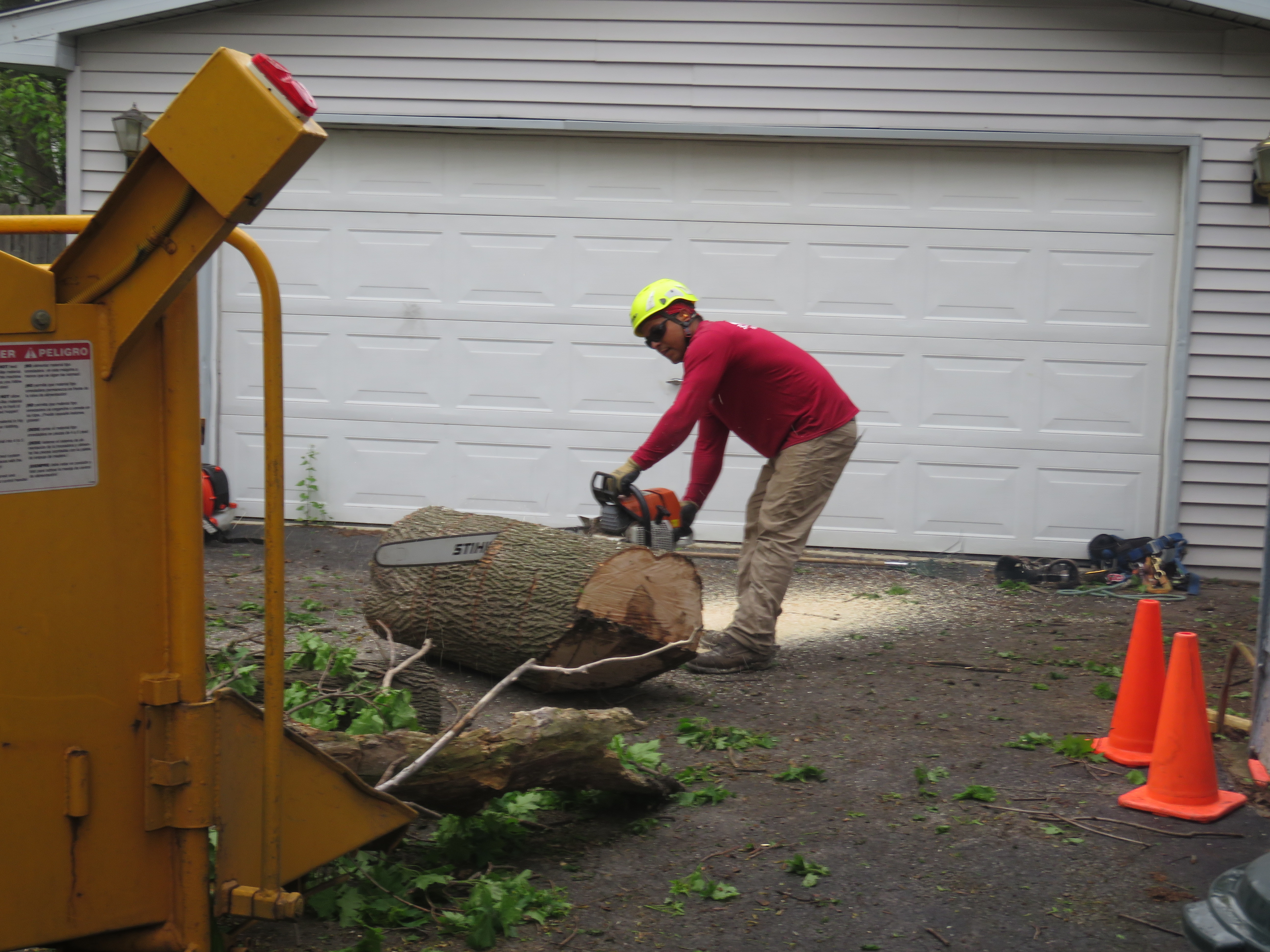 Rivas Tree Service image 1