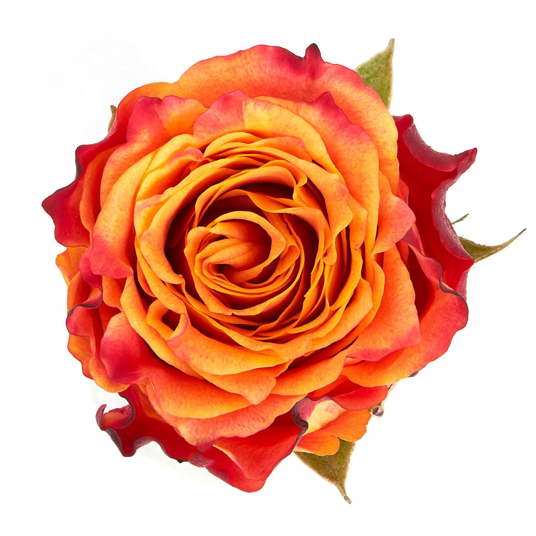 FMI Farms Flower Wholesale image 1
