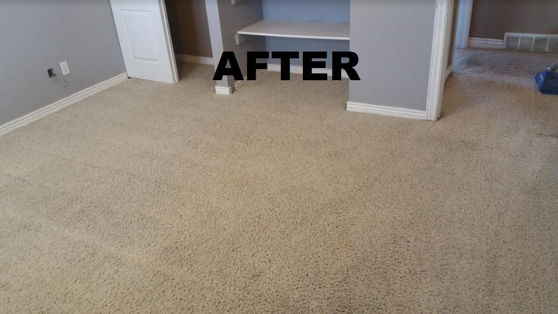 All Clean Carpet Care image 4