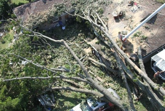 Sprouse's Tree Service LLC image 4