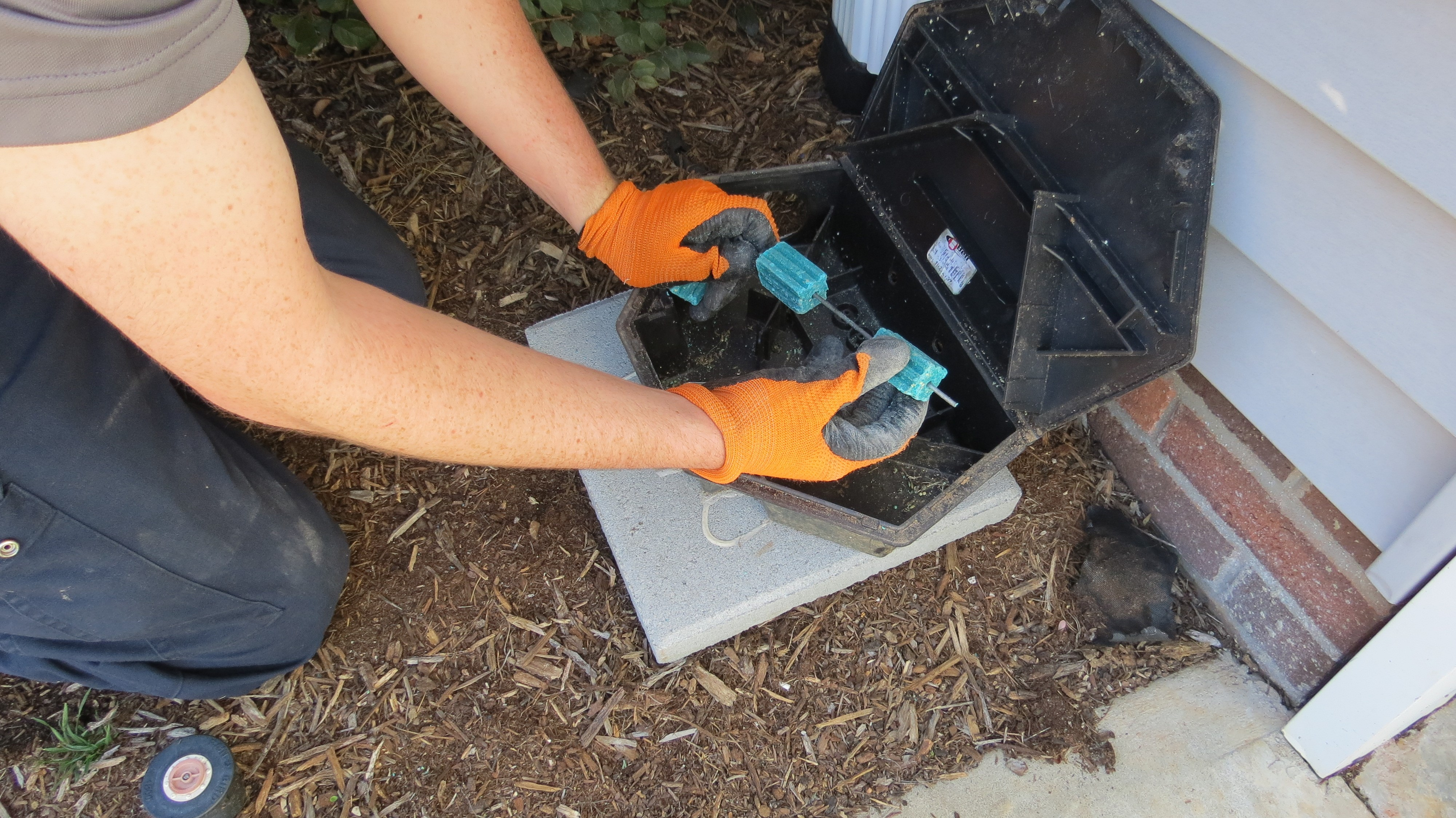 Foothills Pest Control image 4